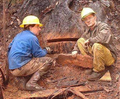 Comtemplating an exploratory cut in a coast redwood killed by the Canoe fire. Rocco Fiori (left); Steve Norman (right) [Credit: Stephen Underwood, CDPR]
