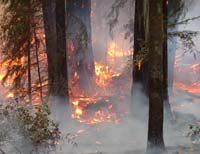 Credit Stephen Underwood 2003 Canoe Fire